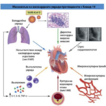 Cardiovascular system and COVID-19